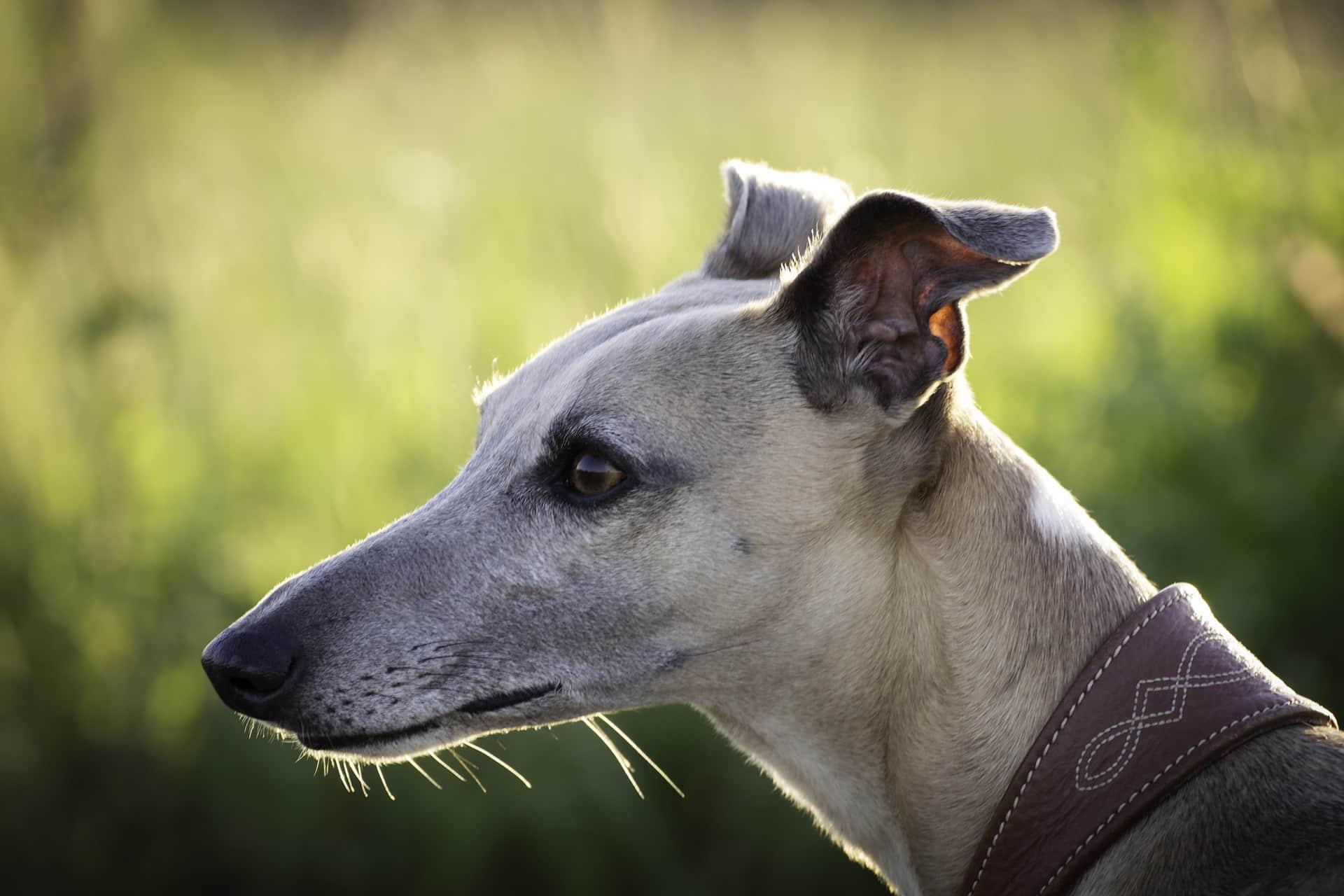 Greyhound The Pas
